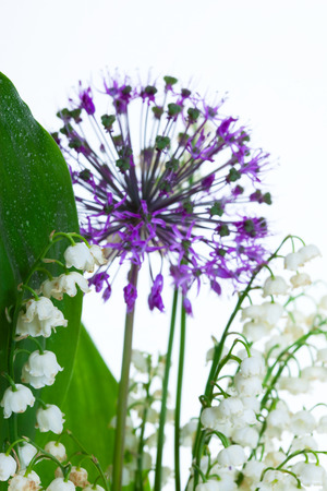 macro Lily of the valley and decorative onions studio on white background