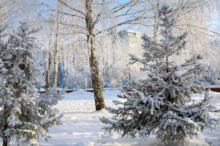 winter landscape trees and shrubs in a city park in the frost and snow in cold day photo