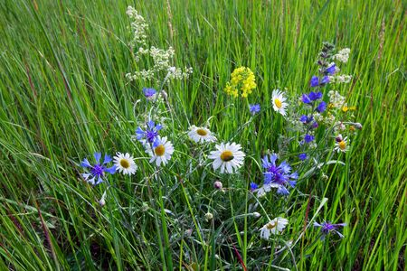 macro wildflowers on a green meadow on a clear summer day