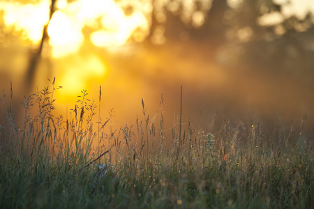 Zomer landschap mistige ochtend in een eikenbos bij zonsopgang Stockfoto - 30088694