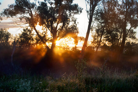 summer landscape bright rays of the rising sun through the trees early misty morning