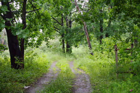 summer landscape dirt road in the deciduous forest on a cloudy day photo