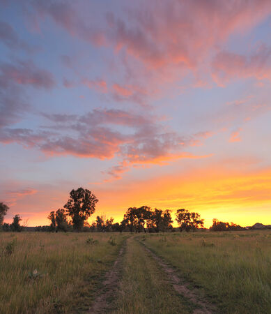 summer landscape beautiful bright sunset over the meadow and oak forest on the horizon photo