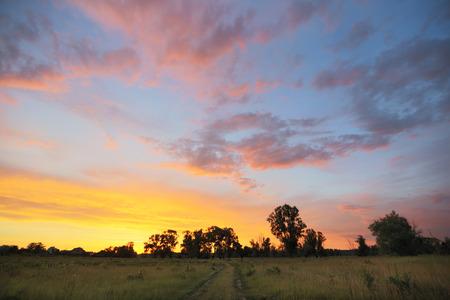 夏の風景の美しい明るい地平線上草原およびカシの森林に沈む夕日