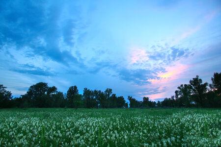 Sommerlandschaft Rosa Sonnenuntergang über Der Wiese Mit Weißen ...