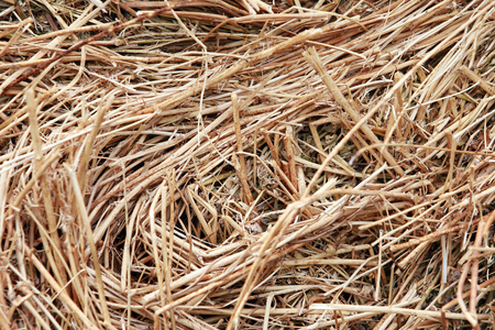 Macro texture of straw collected in a haystack in summer sunlight photo