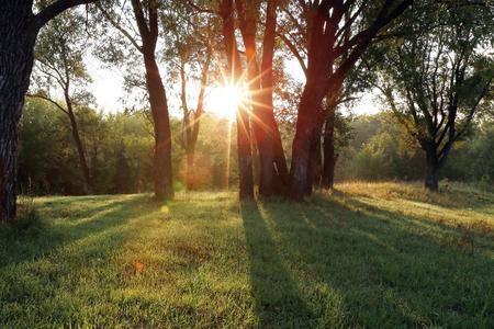 sauce: paisaje de otoño de una hermosa puesta de sol en el bosque, los rayos del sol se abren camino a través del follaje Foto de archivo