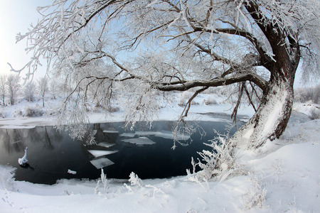 winter landscape of snow-covered fields, trees and river in the early misty morning photo