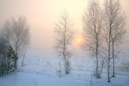 winter landscape misty dawn in the forest  frosty morning photo