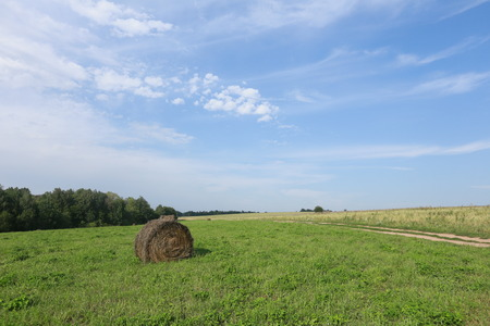 cirrus clouds: summer landscape haystacks in a field near forest and cirrus clouds in the blue sky