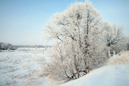 deep freeze: winter landscape of snow-covered fields, trees and river in the early misty morning Stock Photo