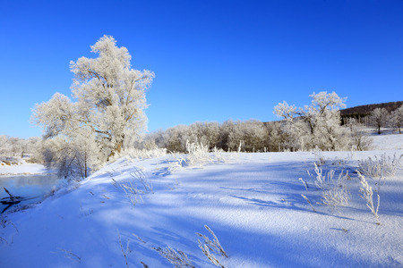 frosty morning: Winter landscape trees in frost in a snowy field in the early frosty morning Stock Photo