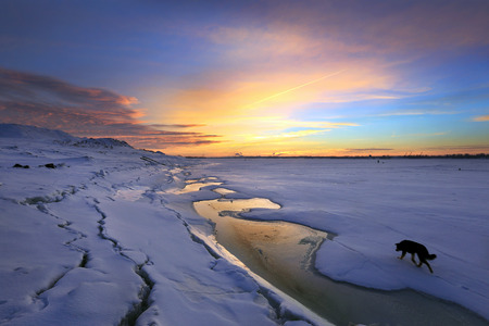 kama: winter landscape sunset on the ice of the river and lonely dog