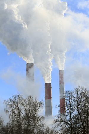 industrial landscape pipe plant with white smoke and the tops of trees without leaves against the blue sky photo