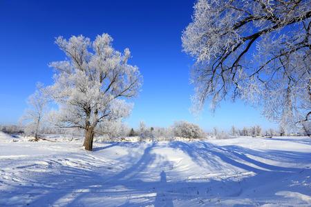 日当たりの良い凍りつくような朝の冬風景霜オークス