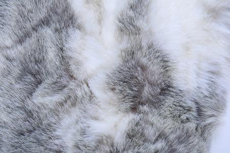 マクロ テクスチャ灰色ウサギの毛皮のスタジオ