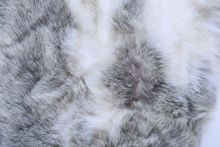 Makro Textur grauem Kaninchenfell Studio
