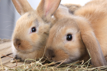 close-up pair of easter bunny on white background studio Banque d'images