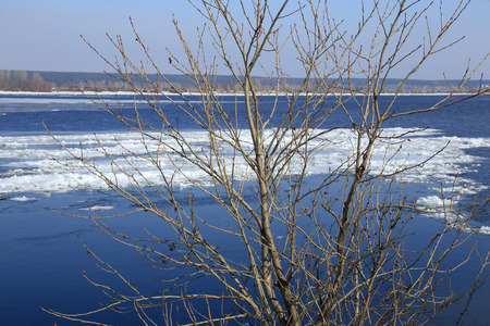 close-up of branches with swollen buds on the background of the river and ice drift in the early spring on a sunny day photo