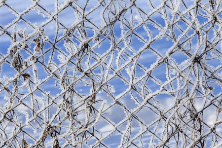 rabitz: macro texture frost on a metal fence