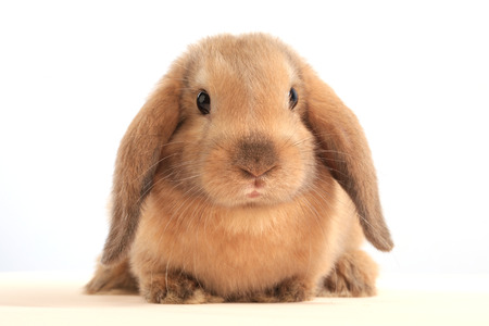 close-up of easter bunny on white background studio photo