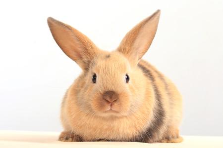 huevo blanco: primer plano de conejo de Pascua en el fondo blanco del estudio