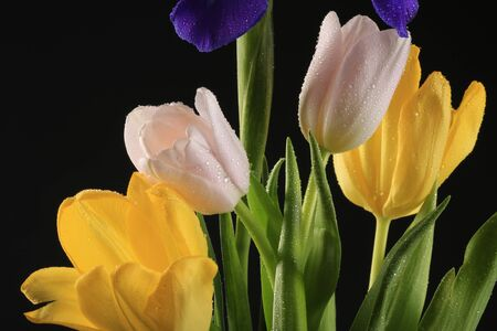 close-up of beautiful tulips and irises in a glass bottle on black background studio photo