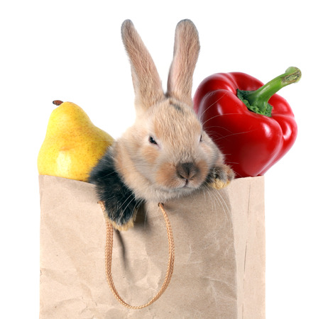 close-up portrait Bunny rabbit in a paper bag with vegetables and fruits on a white background studio photo