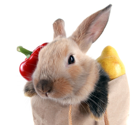 close-up portrait Bunny rabbit in a paper bag with vegetables and fruits on a white background studio Stock Photo