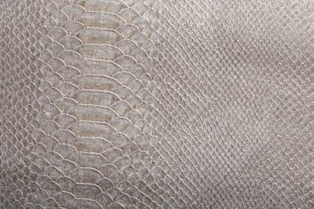 macro texture of gray snakeskin studio