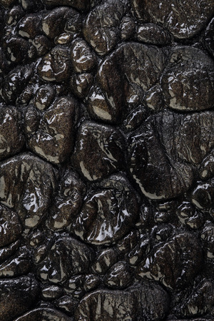 fragment: macro texture fragment brown crocodile leather studio