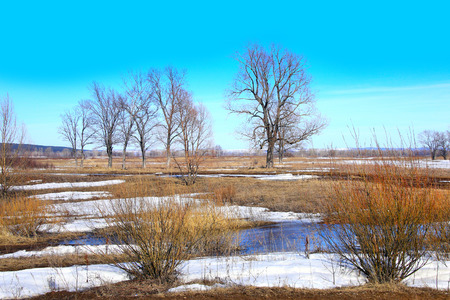 Landscape Early spring in the field on a sunny day photo