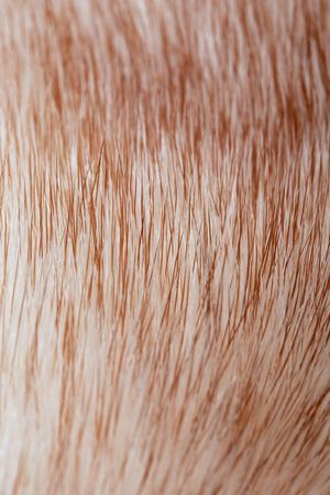 mink: Macro texture of fur mink light color studio