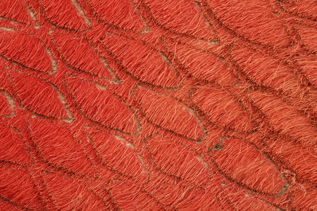 reverse: macro texture fragment reverse side orange leather studio