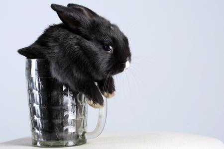 Close-up von einem schönen kleinen black bunny in einem Kreis auf hellem Hintergrund Studio Standard-Bild