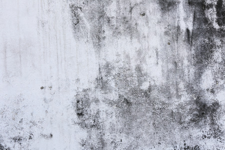 black mold: macro texture fragment of the old white-gray wall with mold