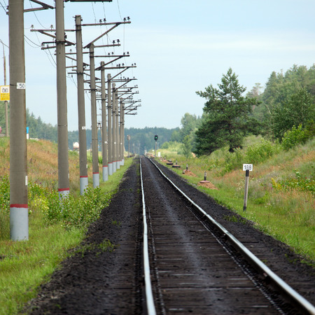 forest railroad: Summer landscape of railroad tracks and the highway next to a pine forest