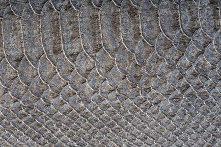 constrict: macro texture of gray snakeskin studio