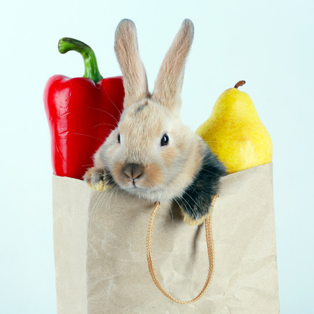 rabbit: close-up portrait Bunny rabbit in a paper bag with vegetables and fruits on a white background studio Stock Photo