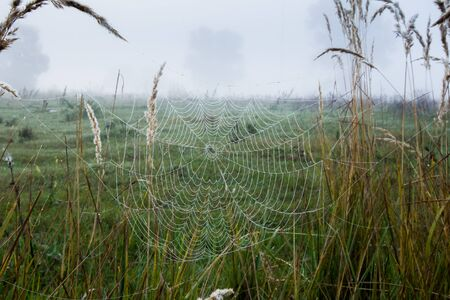 dry grass: autumn landscape cobwebs on the dry grass in the oak grove in the misty morning at sunrise Stock Photo
