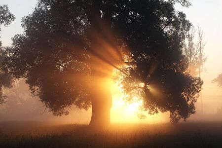 summer landscape breathtaking sunrise on the banks of the river, the suns rays through the trees Stock Photo