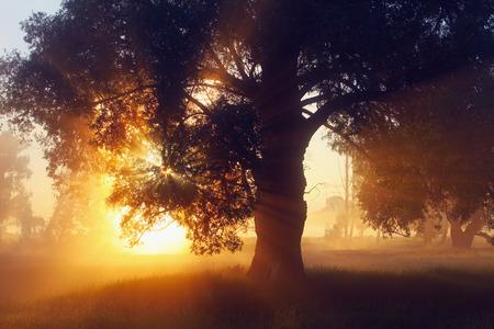 schilderachtig zomer landschap mistige dageraad in een eikenbos, op de oevers van de rivier