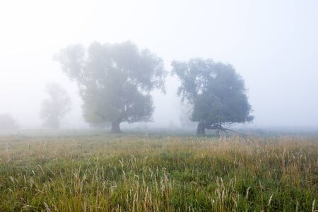 cobwebs: autumn landscape cobwebs on the dry grass in the oak grove in the misty morning at sunrise Stock Photo