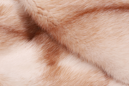 visone: Macro trama di pelliccia di visone color luce di studio