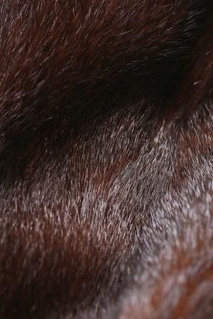 visone: close-up di texture di naturale pelliccia di visone scuro