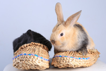 bast: close-up of two rabbits, black and beige, sitting in bast shoes on a light background studio