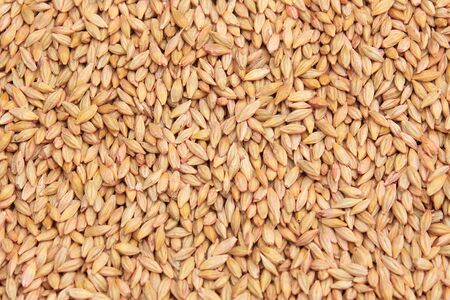 sifter: macro isolated texture piles selected grain for sowing in natural lighting Stock Photo