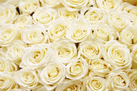 白バラの巨大な花束の分離のクローズ アップ
