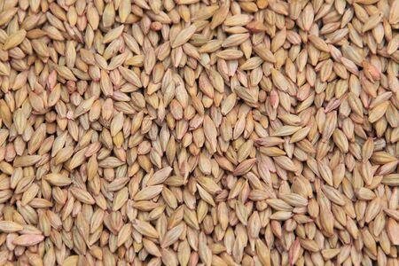 siembra: macro aislados pilas textura de grano seleccionados para la siembra en la iluminación natural Foto de archivo