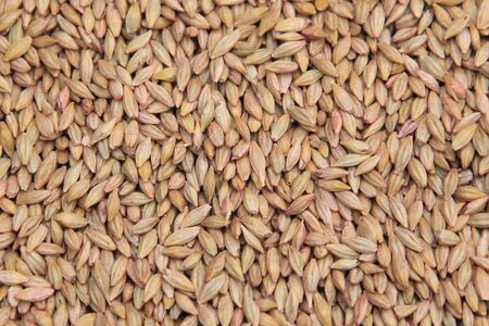 sowing: macro isolated texture piles selected grain for sowing in natural lighting Stock Photo